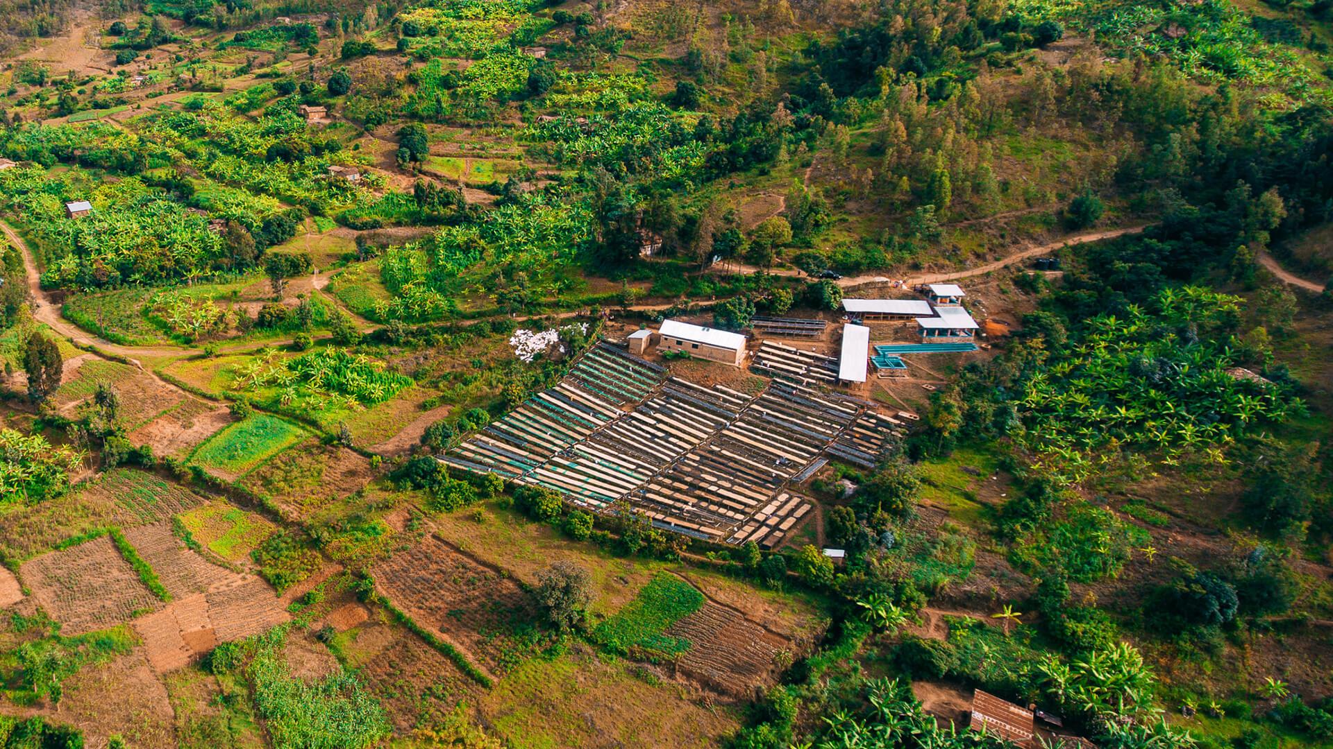 Bumbogo CWS