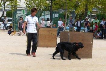 災害救助犬実演の様子