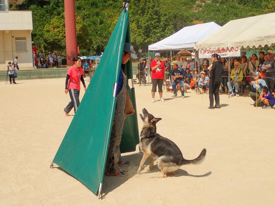 警察犬犯人探索の実演