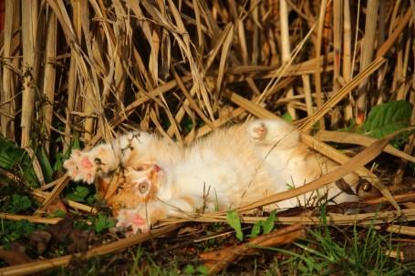 kitten-1074904_1920
