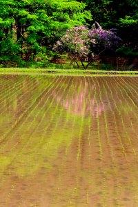 田植えの後の田園風景