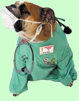 dogdoctor.jpg