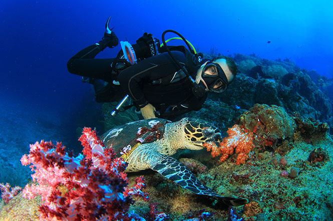PADI-Dive-Courses-Sulwesi-Indonesia