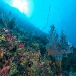 Wall dives at Bunaken