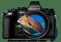MF-Reisefotografie-logo-koffer