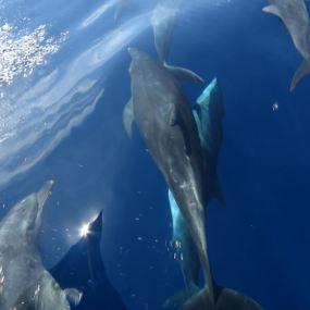 Spinner Dolphins alongside the boat