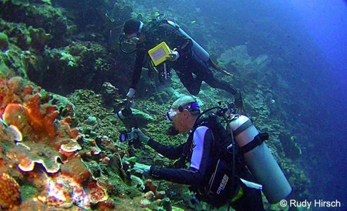 Huib Diving Bunaken Island Murex Dive Resortsmurex Dive Resorts