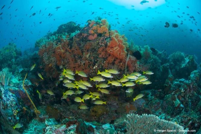 Bangka Reef