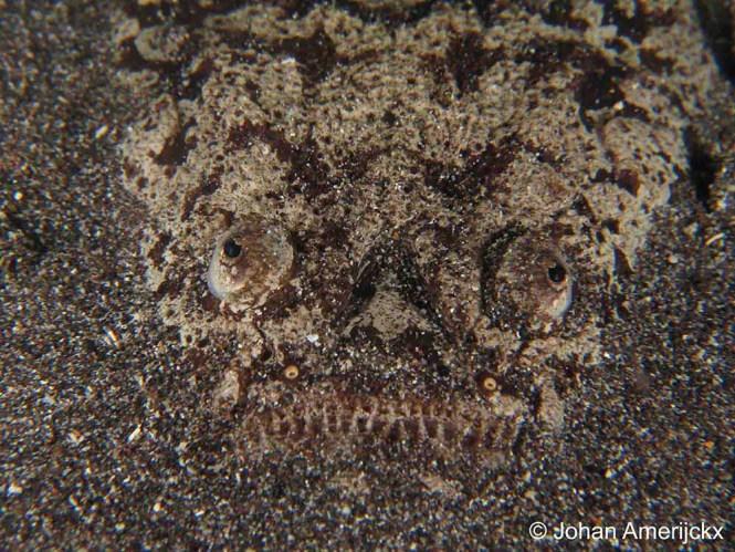 Murex Manado night diving star gazer
