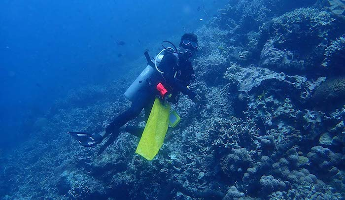 Bunaken clean up dive