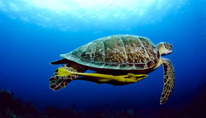 Bunaken Marine Symbiosis