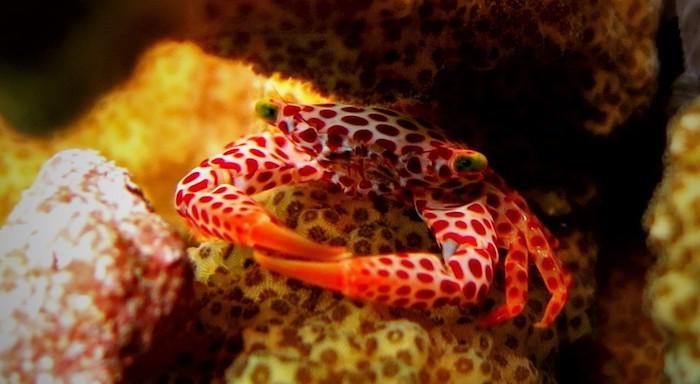 Manado House Reef diving