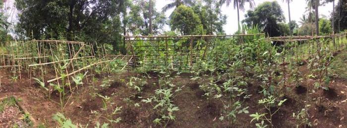 organic farm sulawesi