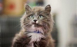 Имена для котов мальчиков - сотни красивых и прикольных ...