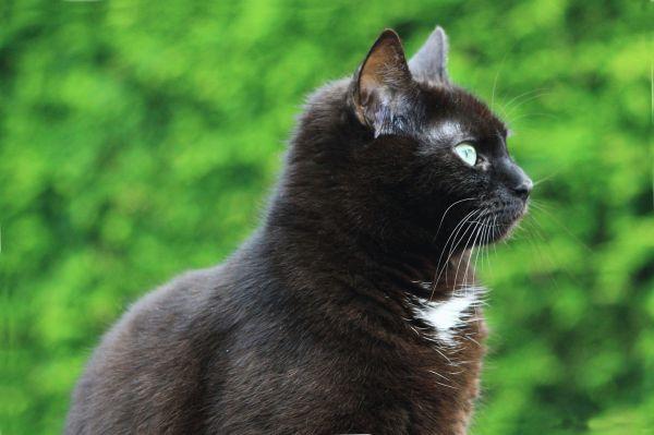 Фото британских кошек разных окрасов (голубой, мраморный и ...