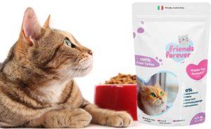 Как правильно кормить кошку сухим кормом | Сайт «Мурло»