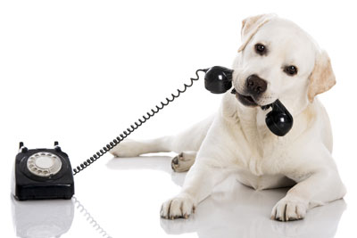 chilled-out-dog-telephone-consultation-holistic-dog-health