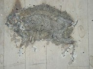 Desiccated rabbit, Wyoming