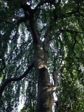 Wunderschöner Baum