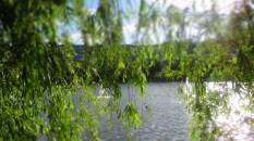 verträumter Blick auf's Wasser