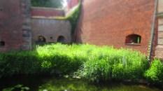 Üppige Wasserpflanzen