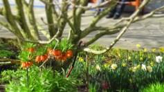 Gärten_der_Welt_6304