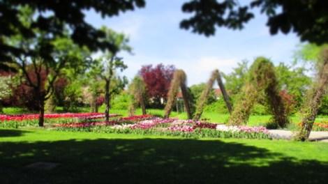 TulipanZauberblüte_6762