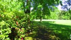 TulipanZauberblüte_6796