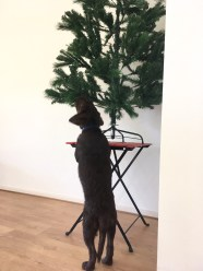 'This tree has no flavour at all..who cares I chew it anyway😏'