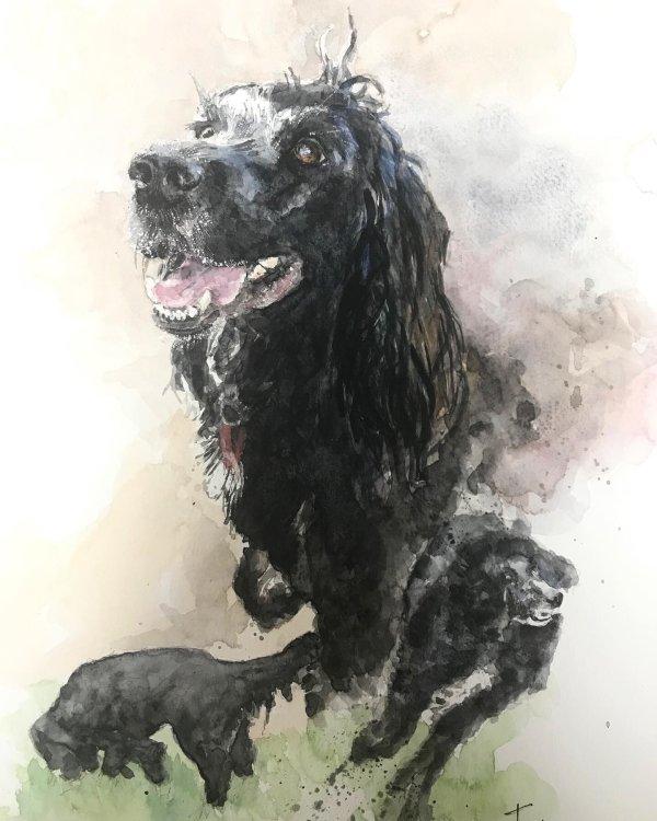 Toby Spaniel by Clare Nisbett. Fine Artist