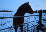 Neighbour's horse