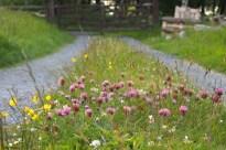 Wildflower 'street'