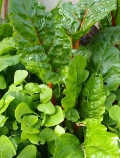 purslane and leaf beat