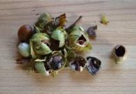 Empty cob nuts