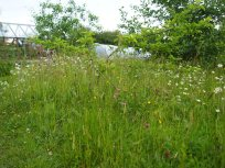 Wildflower meadow and fruit trees