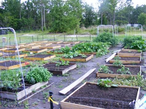 Garden May 25 2008