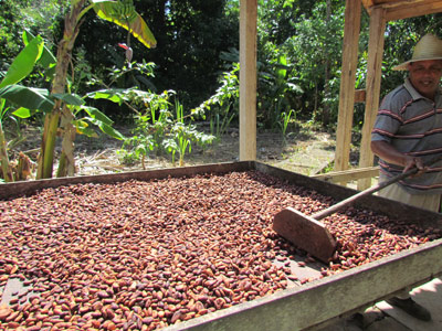 cacao-processing