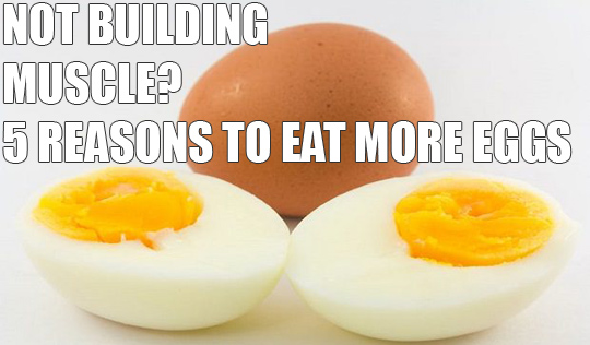 Not Building Muscle? Eat More Eggs. Here's why…