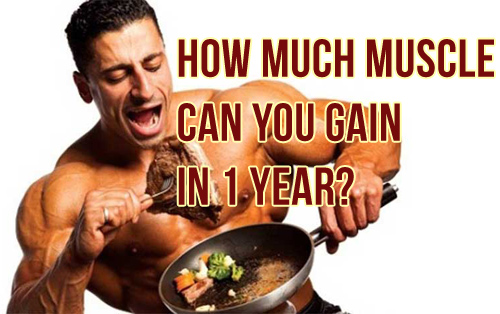 How Much Muscle Can You Gain In A Year, A Month, A Week, A Day?