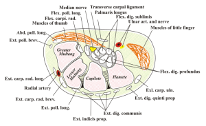Carpal-Tunnel-Syndrome-Portland