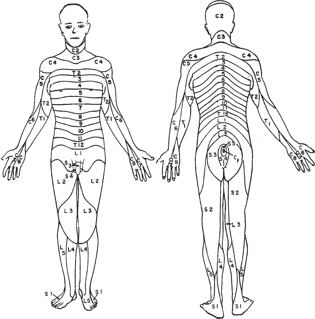 Anatomy And Normal Development In Children