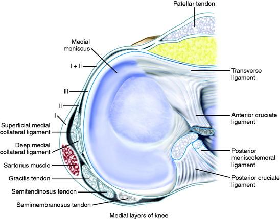 Lateral Patellar Retinaculum Function