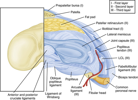 Anatomic Reconstruction of the Posterolateral Corner ...