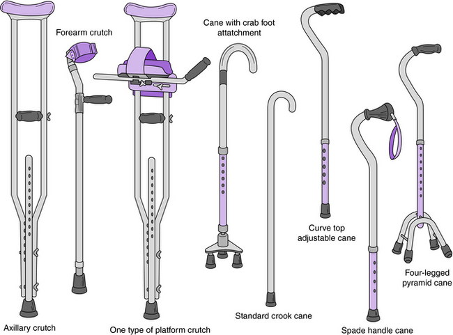 Canes Crutches And Walkers Musculoskeletal Key