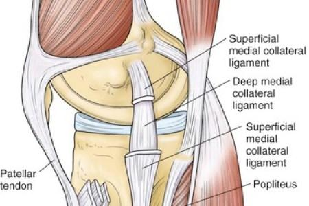 Interior Knee Torn Ligaments Free Interior Design Mir Detok