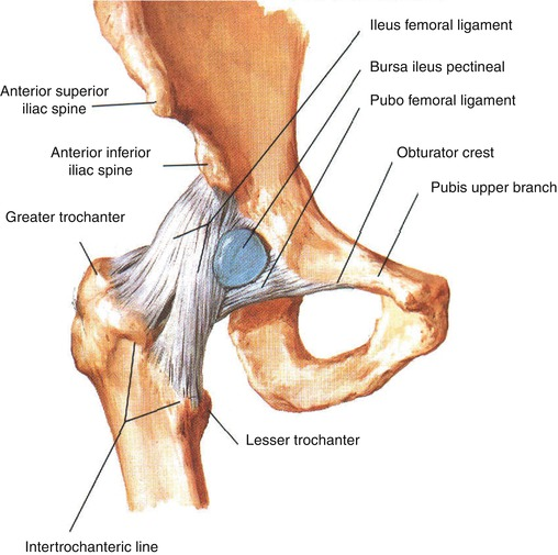 Iliopsoas Tendinopathy | Musculoskeletal Key