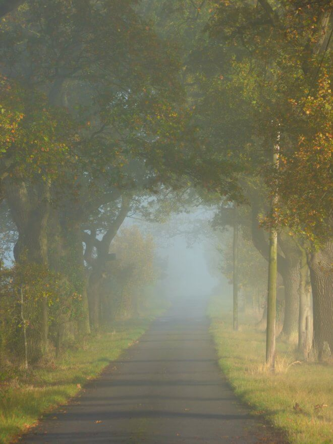 foggy-morning-019.jpg?fit=660%2C880