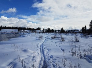 It was beautiful out there on buffalo ski patrol, making tracks alongside other animals in the fresh snow.