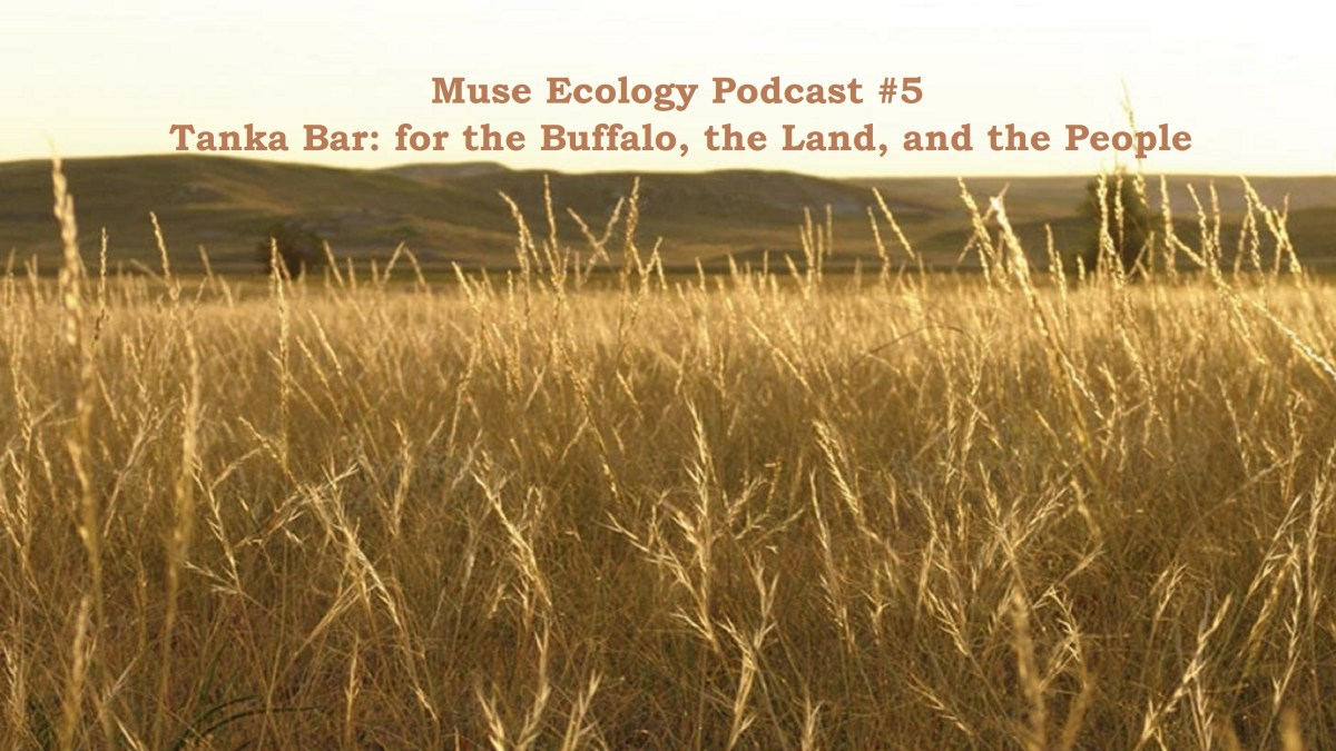 #5 Tanka Bar: for the Buffalo, the Land, and the People