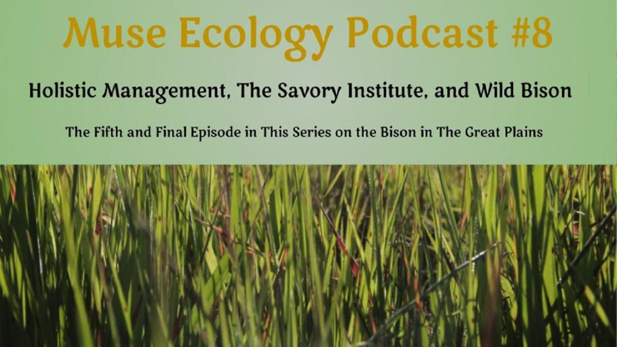 #8 Holistic Management, The Savory Institute, and Wild Bison